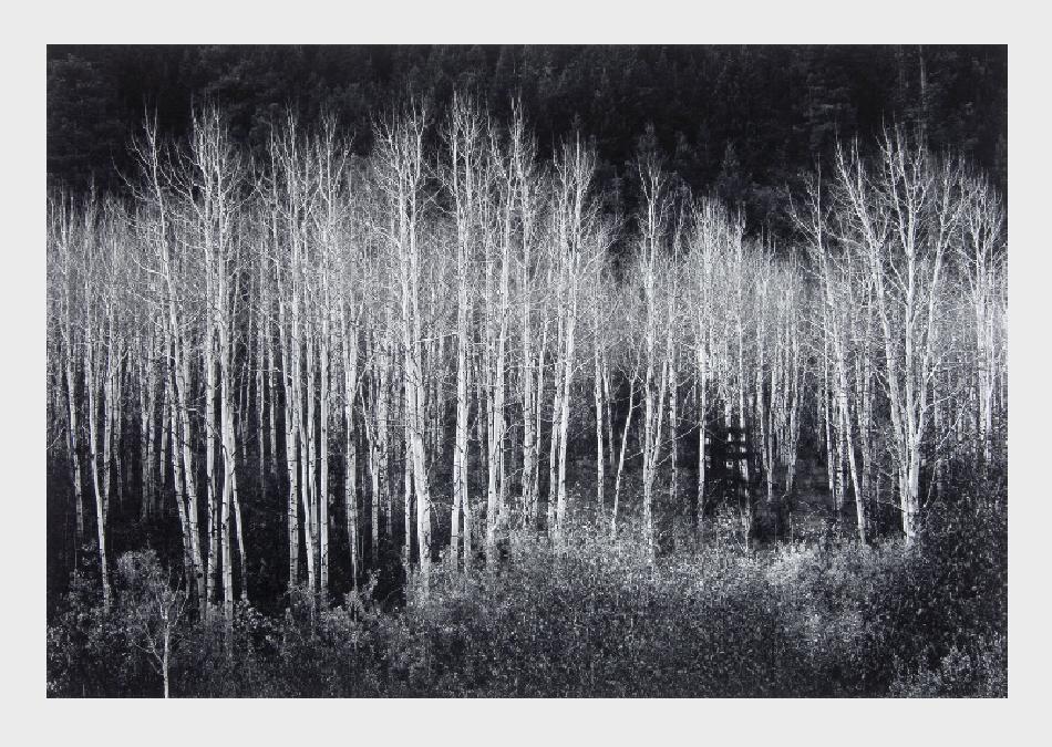 adams-ansel-landscape-8