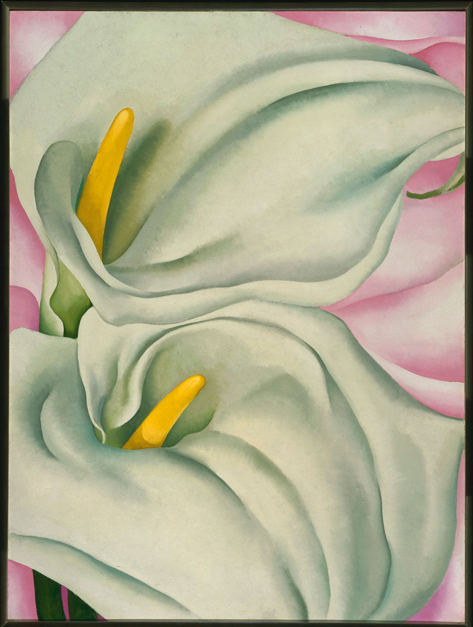 two-calla-lilies-on-pink__georgia-o-keeffe__alfred-stieglitz-collection