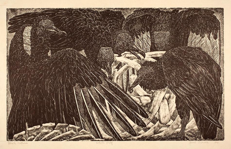 janet-turner_black-vultures