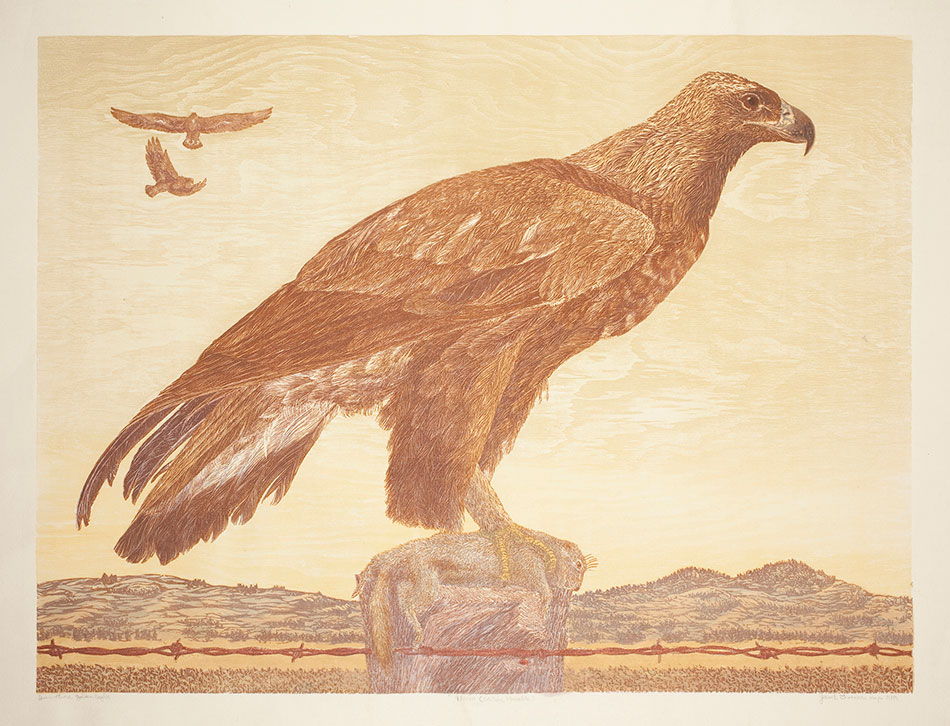 janet-turner_immature-golden-eagle