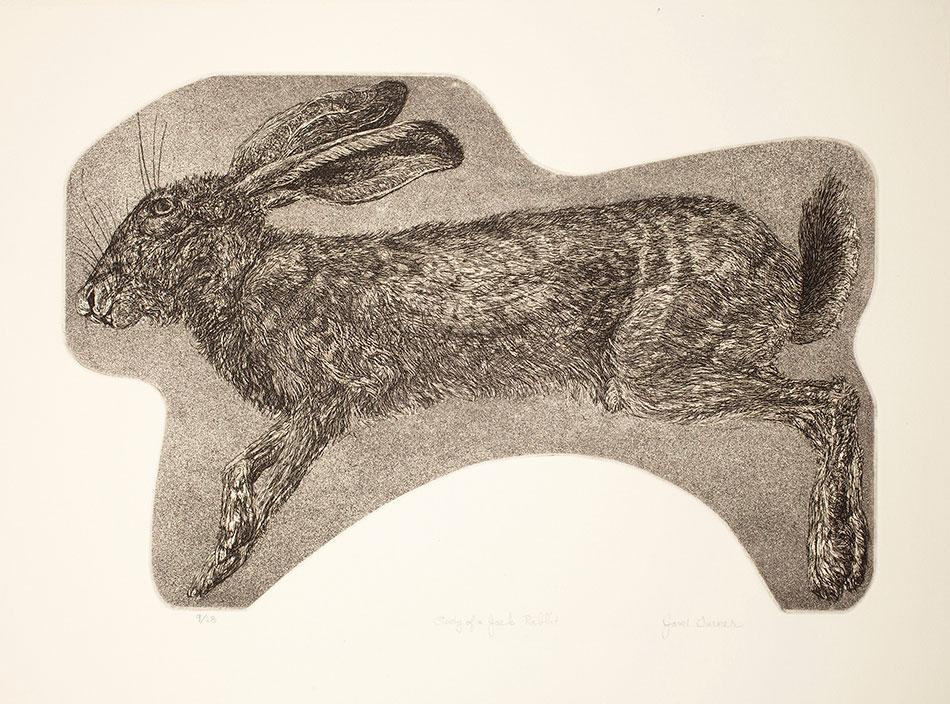 janet-turner_study-of-a-jack-rabbit