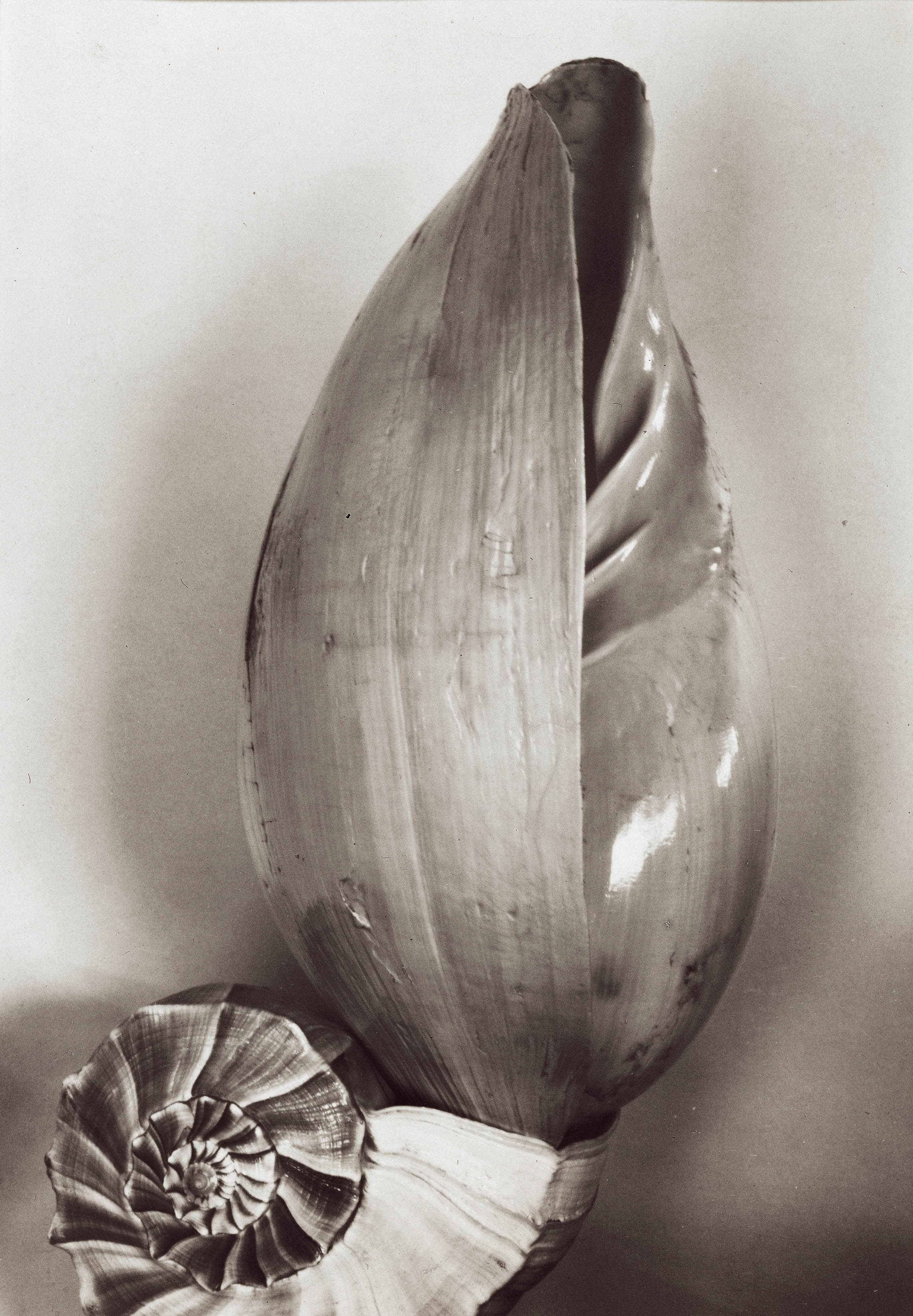 weston_two shells