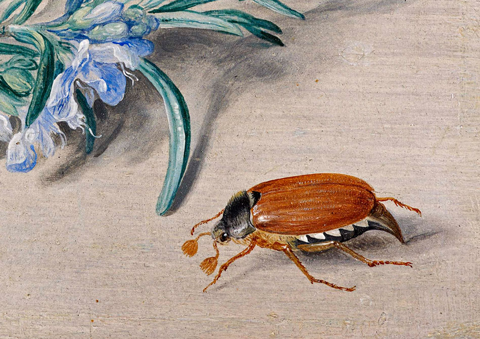 Jan van Kessel_ Insects and a Sprig of Rosemary-detalle-4b_950