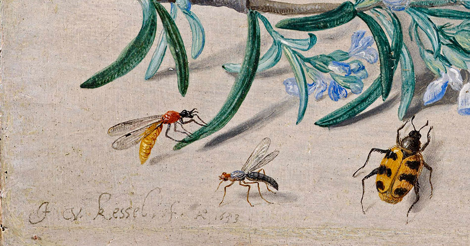 Jan van Kessel_ Insects and a Sprig of Rosemary_detalle-3b_950