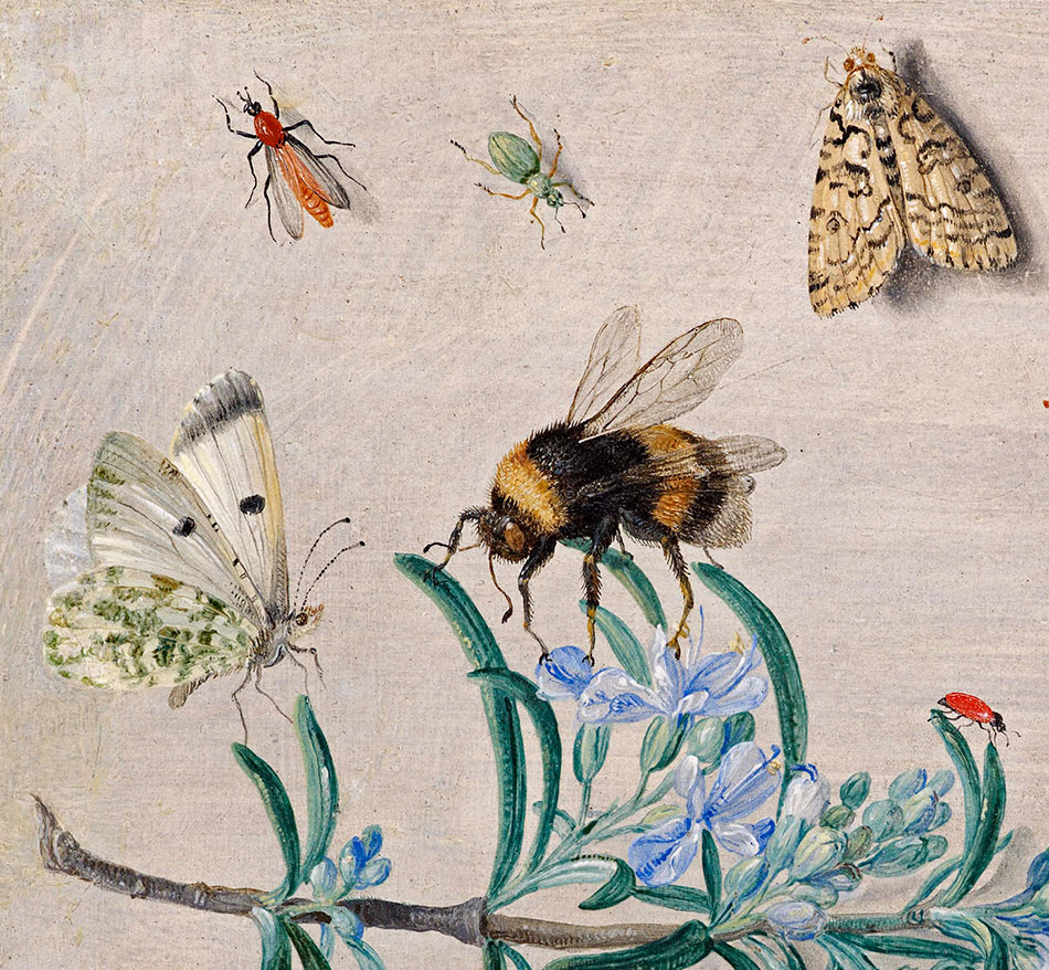 Jan van Kessel_ Insects and a Sprig of Rosemary_detalle_1b_950