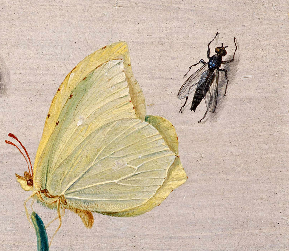 Jan van Kessel_ Insects and a Sprig of Rosemary_detalle_2b_950