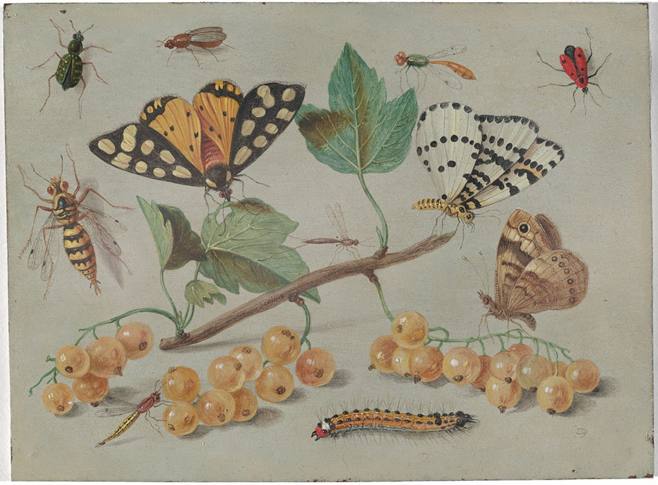 Jan-van-kessel_Study-of-Butterfly-and-Insects_950.jpg