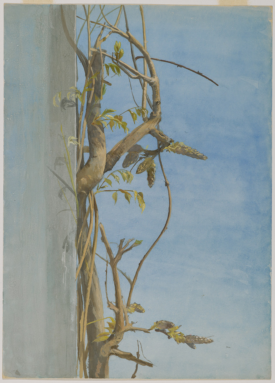 Fidelia-Bridges_Wisteria-ona-Wall_1870s_4104-013_Brooklyn-Museum_New-York_950w