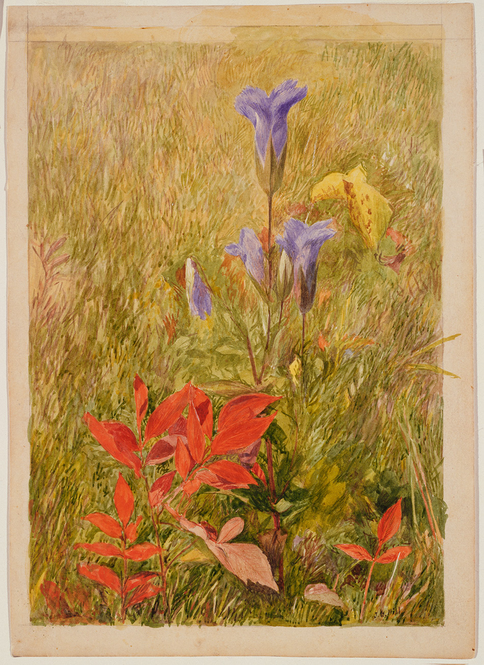 John-Henry-Hill_Fringed Gentians_c. 1867_4104-008_Brooklyn Museum_ New York_950w