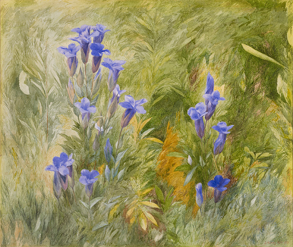 John-Henry-Hill_Gentians-1870_4104-022_Amon Carter Museum of American Art_ Fort Worth_950w