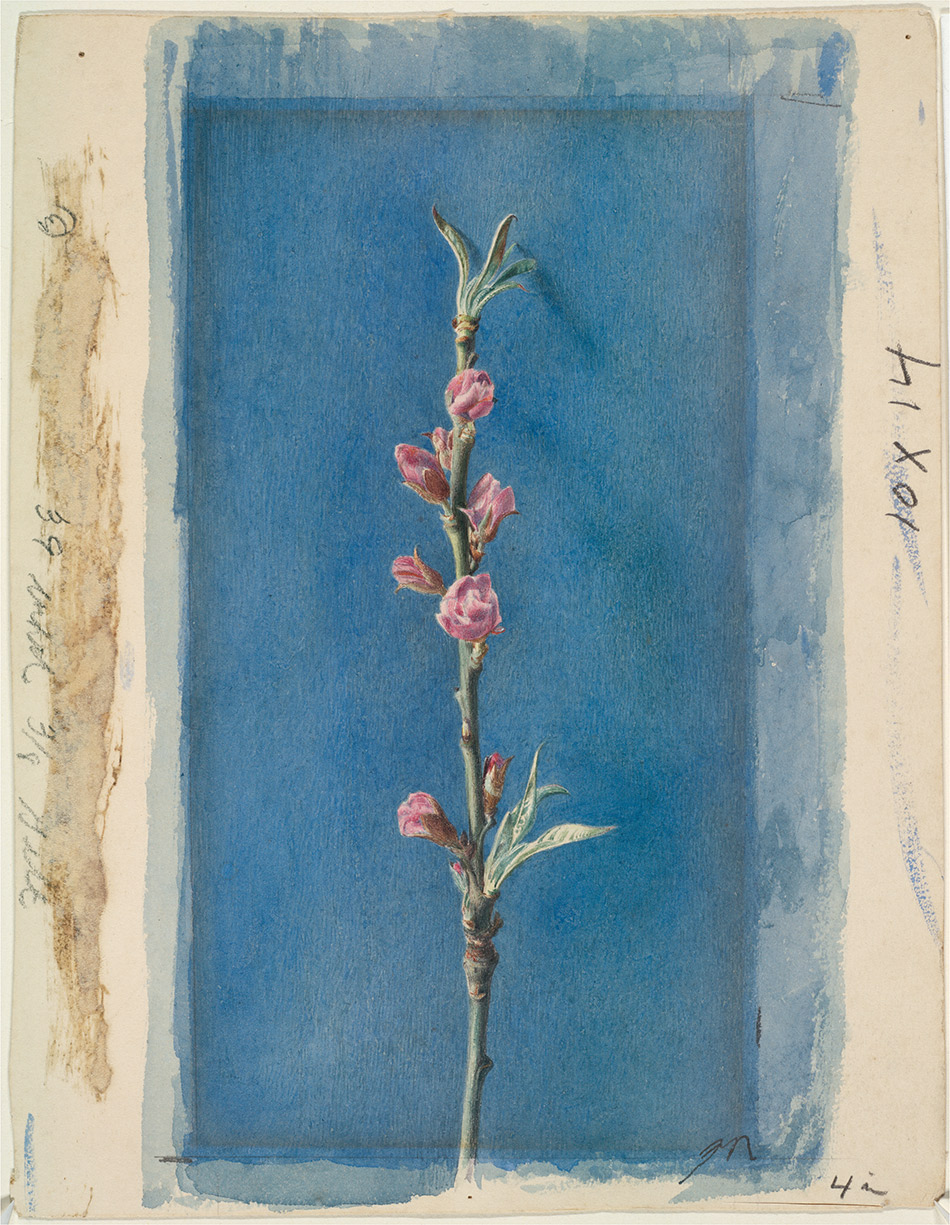 John-Ruskin_Twig-of-Peach-Bloom-c.-1874_4104-018_Harvard-Art-Museums-Fogg-Museum_950w