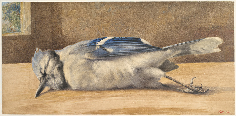 John-William-Hill_Dead-Blue-Jay-c.1865_4104-036_New-York-Historical-Society_950w