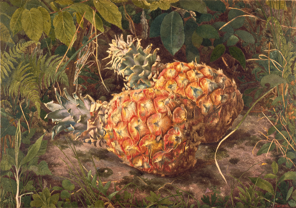 John-William-Hill_Pineapples--c.1864_4104-006_Brooklyn-Museum-New-York_950w