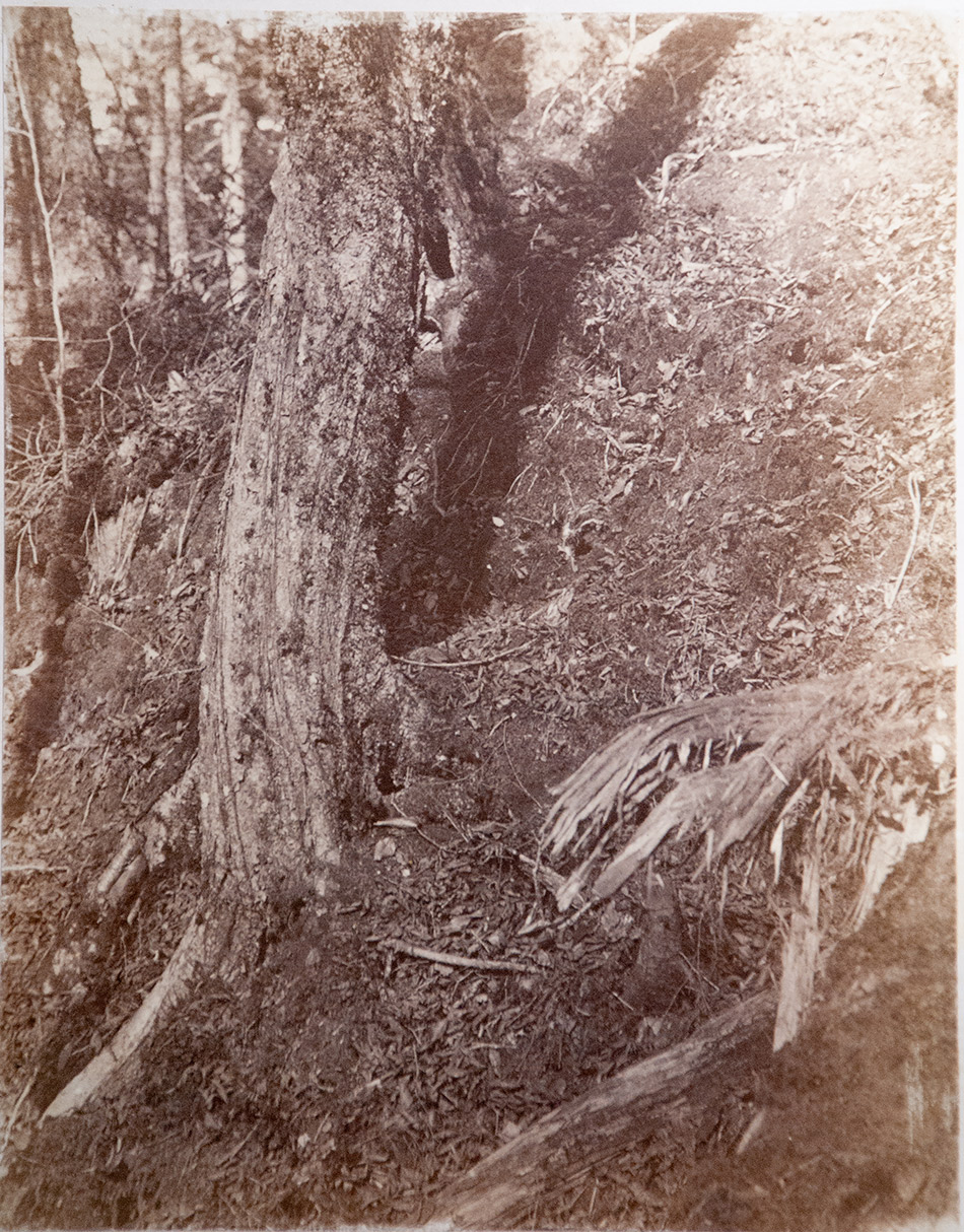 William-James-Stillman_Photographic-Study-from-Photographic-Studies-by-W.-J.-Stillman.-Part-1.-The-Fores-Adirondac-Woods-1859t._4104-104_Milne-Library-Special-Collections_950w