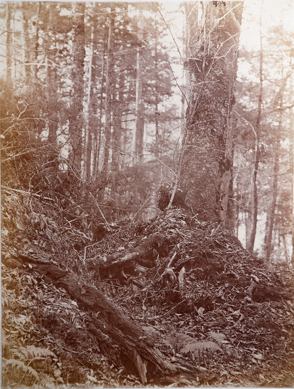 William-James-Stillman_Photographic-Study-from-Photographic-Studies-by-W.-J.-Stillman.-Part-1.-The-Forest._Adirondac-Woods-1859_4104-102_Milne-Library-Special-Collections,_950w