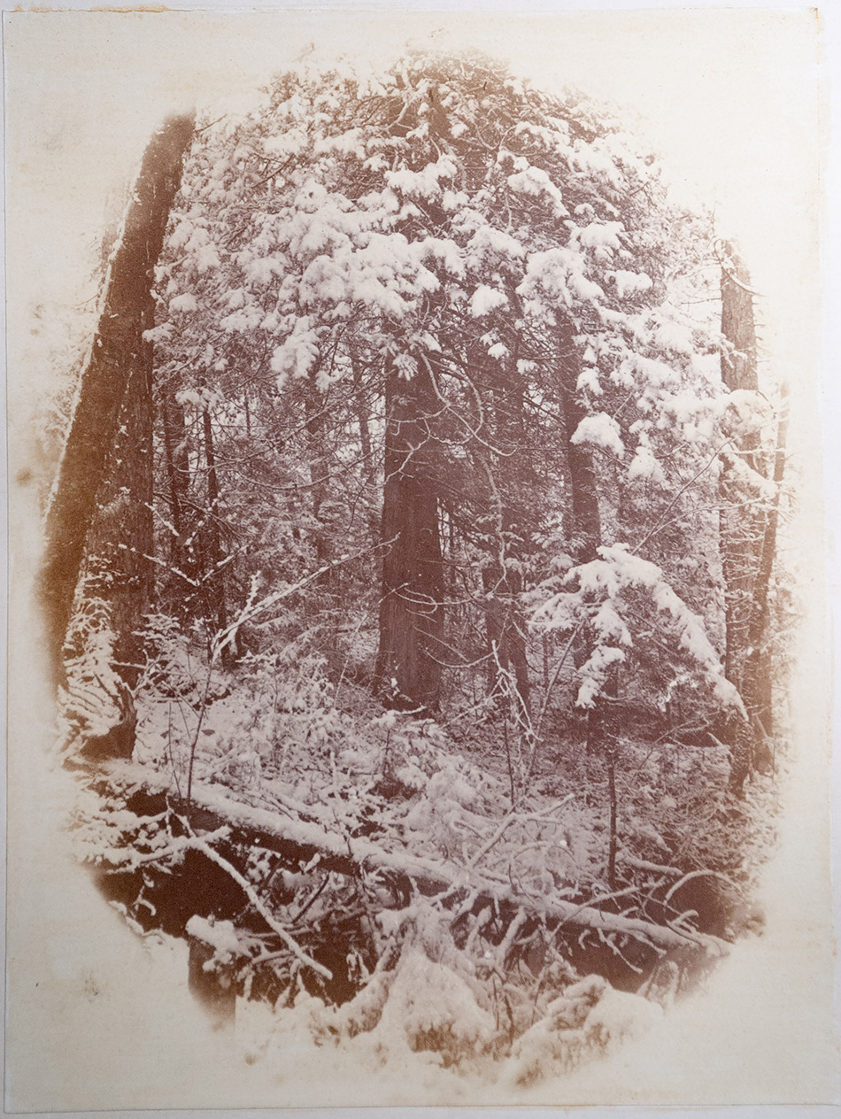 William-James-Stillman_Photographic-Study-from-Photographic-Studies-by-W.-J.-Stillman.-Part-1.-The-Forest_Adirondac-Woods,-1859_4104-103_Milne-Library-Special-Collections_950w