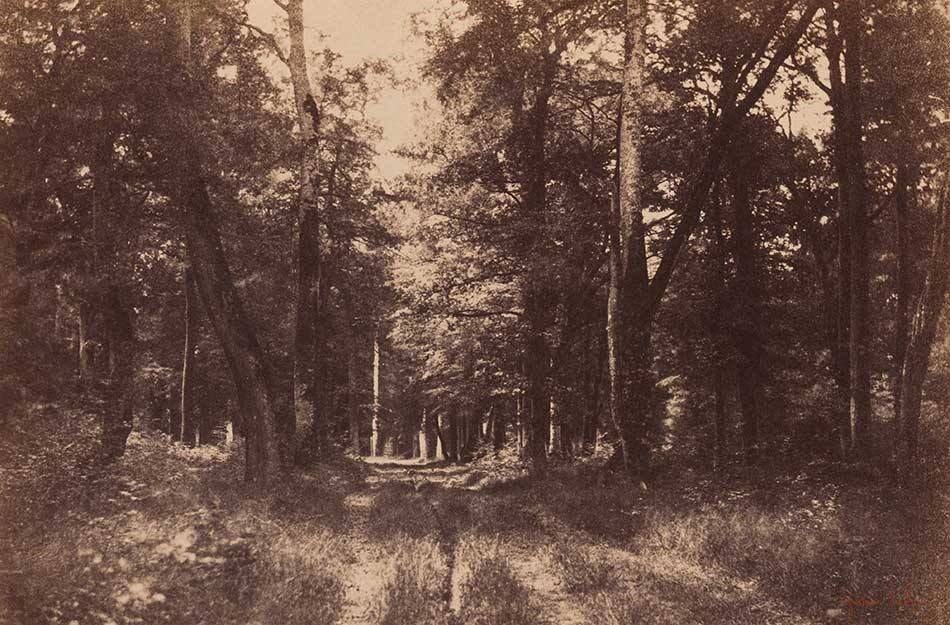 Gustave-Le-Gray_-Bas-Breau_Forest-of-Fontainebleau_1852_950-W